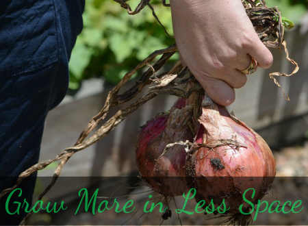Vegetable Gardening PLR – Grow More in Less Space