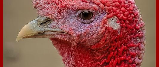 turkey-quotes