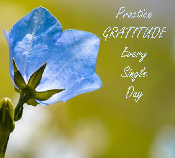 Gratitude - self help plr