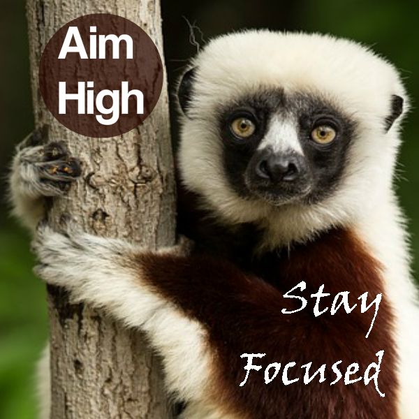 PLR membership promo - Aim High Stay Focused Image
