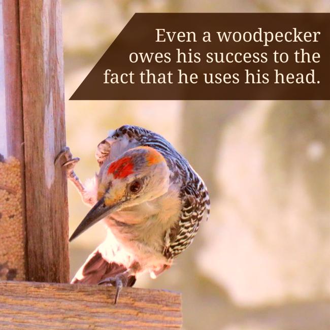 woodpecker social image